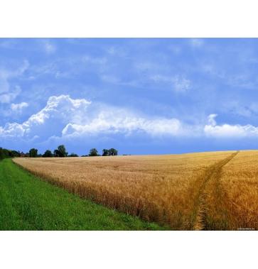Оформление прав общедолевой равным образом других видов собственности сельскохозяйственных земель.